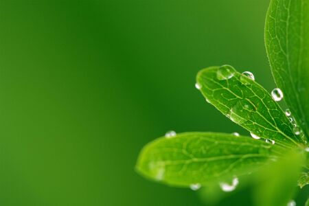 Green leaf with drops, on green background Foto de archivo
