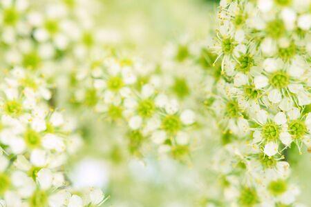 Spring blossom, floral background 3