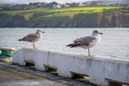 Couple of birds relaxing at the pier on coastline in Douglas, Isle of Man