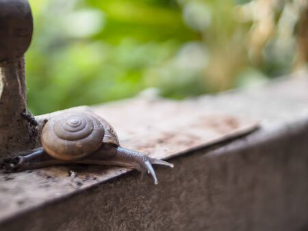 snail in helix shell slowly crawling on equipment