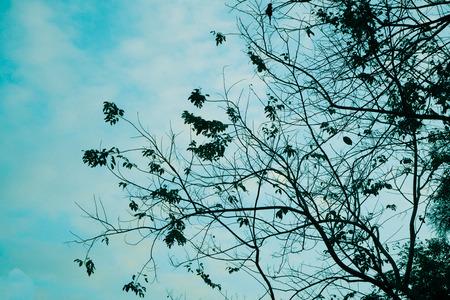 fallen leaves tree lonliness feeling with blue nature sky in autumn season change background Standard-Bild - 114662894