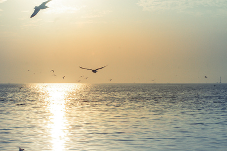Seagulls flying at sunset vanilla sky little white clouds over the sea peacefulness beautiful nature background Imagens