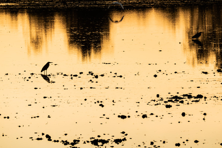 colorful sunset at the river bank lake with bird silhouettes beautiful reflection nature background