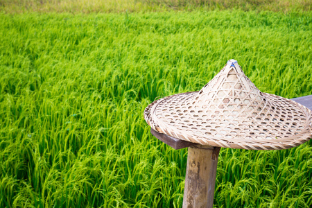 straw hat in wheat field green fresh environment nature and holiday concept idea travel Asia background