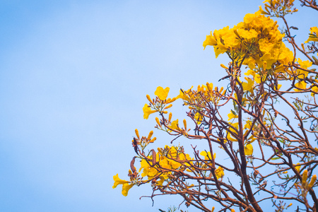 yellow flowers blossom in spring summer bluer sky background lively season holday concept idea 免版税图像
