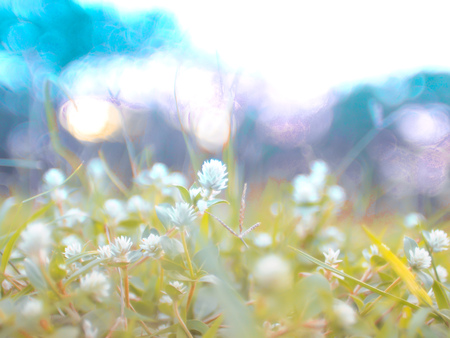 wild meadow flower grass beautiful flowers in spring fied. Nature ourdoor vintage sunny photo with sun and blue tone colours in evening sunlight