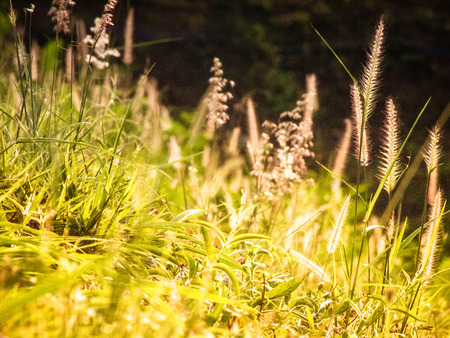 Field with wildgrass grass wildflowers  flowers during sunlight. Beautiful summer landscape Archivio Fotografico