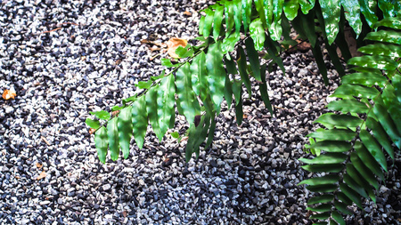 Lush green plant leaves and stone wall background. Green ferns background. Aged Stone ground texture.ure. Reklamní fotografie