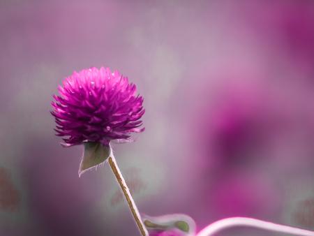 Vintage background little flowers, nature beautiful, toning design spring nature, sun plants .Purple color. Field of summer Reklamní fotografie