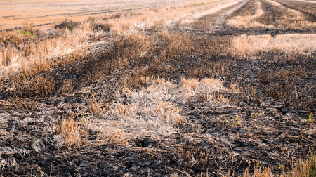 Forest fire, burning grass and small trees. Fire burns grass and branches. Pollution. Save earth idea