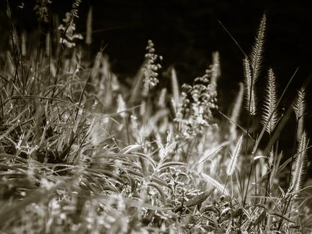 Wild field of grass on sunset, soft sun rays, warm toning summer nature. Beautiful landscape. Holiday. Refresh idea wallpaper background Reklamní fotografie
