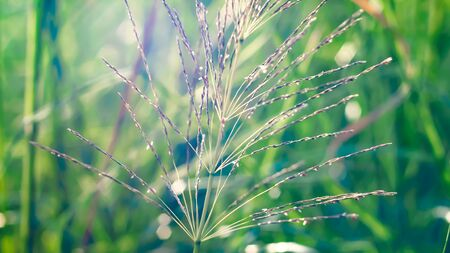 Wild grass beautiful soft flowers in forest. Perfect nature concept idea background