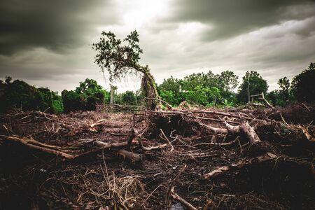 Deforestation environmental damage - tropical rain forest destroyed to construction Stock fotó
