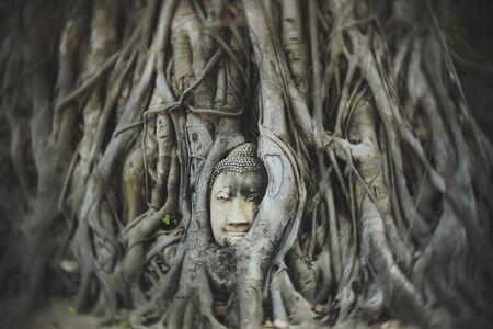 Buddha head .ancient temple Ayutthaya Thailand Stock Photo