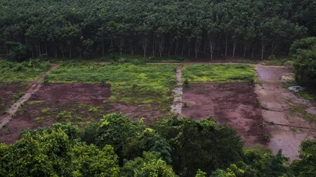 Deforestation: Scarred earth where tropical rain forest has been destroyed by human development 스톡 콘텐츠