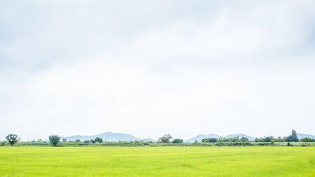 campo de arroz verde en el sol de verano hermoso momento alegre con paisaje de montaña de verano. Paisaje rural con montañas, colinas, campos. Fondo de horizonte de naturaleza de campo Prados con montañas. Foto de archivo