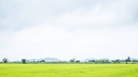green rice field in summer sunshine beautiful joyful moment with summer mountain landscape.Rural landscape with mountains, hills, fields. Countryside nature skyline background Meadows with mountains. Stock fotó