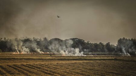 Slash-and-burn agriculture. Fire-fallow cultivation. Fire-fallow cultivation. AIR QUALITY POLICY .clean air problem. Air pollution PM2.5.Open agricultural burning | Climate & Clean Air Coalition