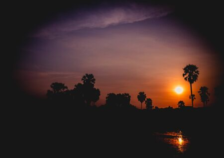 Silhouette of coconut palm trees during sunset next the sea water on island in Thailand. Nature and travel concept. Sun, red sky. Silhouette of Palmyra Palm field 写真素材