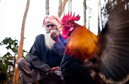 Enthusiasts Gather For Mass Cock Fighting Ritual
