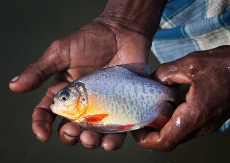 banned piranha rupchanda fish