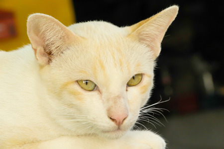 whiskar: Cute white cat