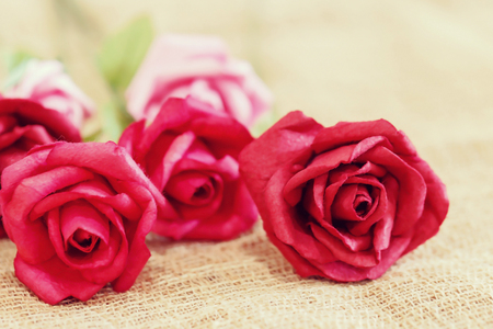 ingram: Paper roses with soft and blurred focus , vintage and retro Stock Photo