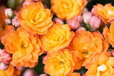 Close-up mooie oranje bloemen