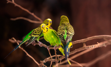loros verdes: beautiful green parrots lovebird on  nature background