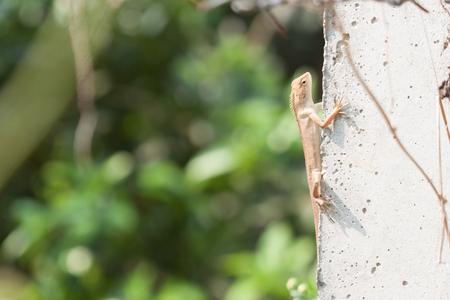 cement pole: chameleon on a cement pole.