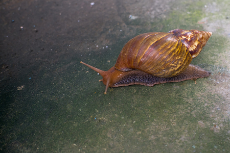Snail climb on a paved road. Slow life. Zdjęcie Seryjne