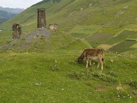 swanetia: Two old towers green meadow in Swanetia Ushguli - Georgia Stock Photo