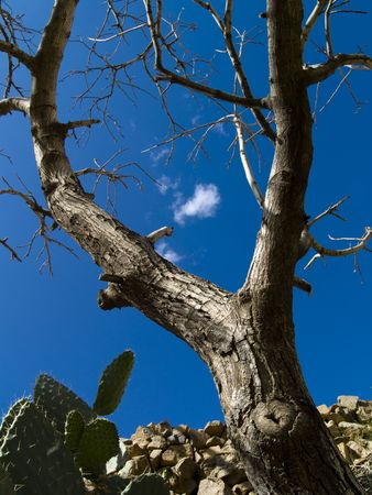 Sunny summer day, blue sky white clouds, big tree photo