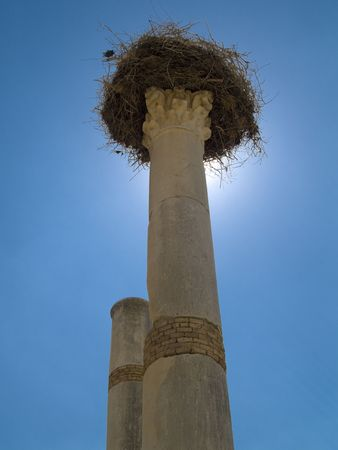 One wooden foretop on the pillar in Volubilis Roman city in Morocco.