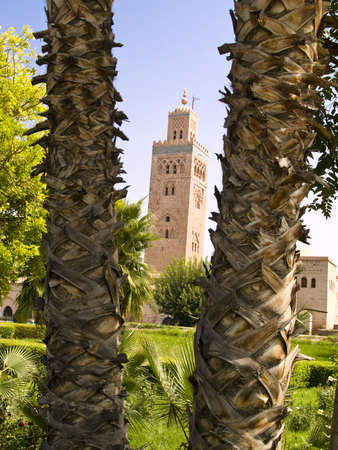 Marocco: Big palm trees in background Koutoubia mosque in Marrakesh in Marocco
