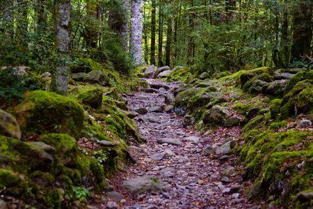 pfad: Kleine steinige Pfad in gr�n dunklen Wald, Pyren�en