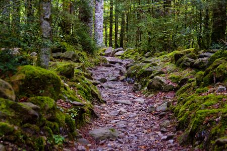 Small stony path in green dark forest, Pyrenees Stock Photo