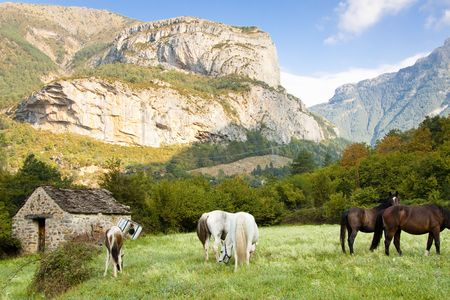 pyrenees: Few wild horses in National Ordesa Park. Summer sunny day - Spain, Pyrenees