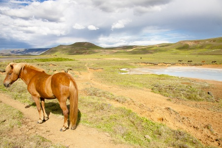 Beauty cloudy landscape and meadow with horses - Iceland. Stock Photo - 8349811