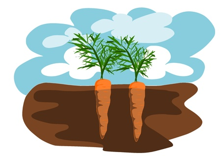 Two carrots in the ground  Vector