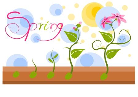 kassen: Plant vegatation in de lente