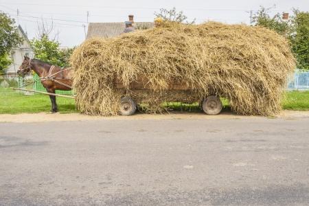 haymaking: One brown horse transportation hay on wooden cart - Ukraine. Summer day.