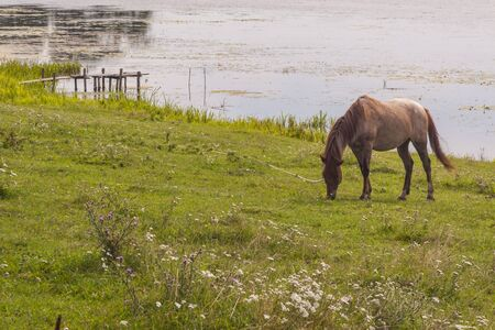 Brown horse on coast of lake - Ukraine, Ostroh. Rural view. photo