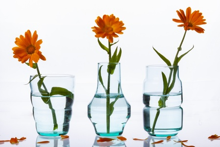 Three vase on white background. photo