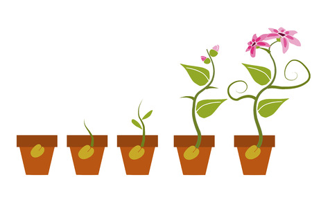 seedling growing: Phases of growth of a flower.