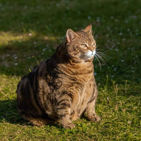 A fat cat standing in the garden, funny animal
