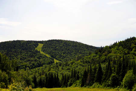 view of a mountain in summer Banco de Imagens