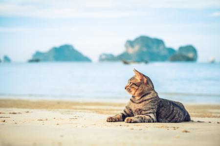 cute cat relaxing on railay beach in Krabi , Thailand , Asia