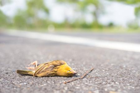 Dead little bird on the asphalt road