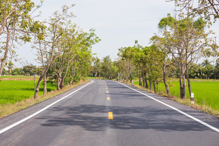 Empty road surrounded by rice fields in day .